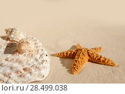 Купить «Starfish and seashells on white sand beach on sunny vacation day», фото № 28499038, снято 29 января 2006 г. (c) Ingram Publishing / Фотобанк Лори