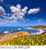 Купить «California Bean Hollow State beach in Cabrillo Highway on State Route 1 San Mateo», фото № 28499238, снято 22 апреля 2013 г. (c) Ingram Publishing / Фотобанк Лори