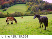 Купить «Horses and cows grazing in Pyrenees green autumn meadows at Spain», фото № 28499534, снято 3 ноября 2013 г. (c) Ingram Publishing / Фотобанк Лори
