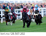 Купить «Pictured this afternoon - 17/10/16 Forget about the Grand National – the biggest horse-racing event on the calendar in Sussex starred junior jockeys racing...», фото № 28507202, снято 17 октября 2016 г. (c) age Fotostock / Фотобанк Лори