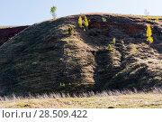 Купить «Прошлогодняя трава», фото № 28509422, снято 14 мая 2018 г. (c) Владимир Федечкин / Фотобанк Лори
