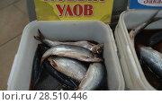 Купить «Соленая селедка нового улова продается на рыбном рынке. Zoom in», видеоролик № 28510446, снято 20 мая 2018 г. (c) А. А. Пирагис / Фотобанк Лори