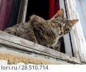Купить «Бездомный кот лежит на окне разрушенного дома», фото № 28510714, снято 2 июня 2018 г. (c) Вячеслав Палес / Фотобанк Лори