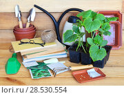 Купить «Kitchen garden. Cultivation of cucumber seedlings. Seeds, spatulas, pots and books on plant growing on a wooden background. Rustic still life», фото № 28530554, снято 26 мая 2018 г. (c) Виктория Катьянова / Фотобанк Лори