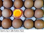 Купить «Eggs, one egg  is opened, the yolk is visible and  illuminated», фото № 28533722, снято 19 марта 2016 г. (c) Куликов Константин / Фотобанк Лори