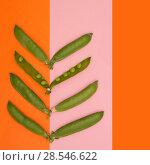 Купить «Стручки зелёного горошка на цветном фоне», фото № 28546622, снято 4 июня 2018 г. (c) V.Ivantsov / Фотобанк Лори