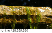 Decorative Waterfall with Stones. Стоковое видео, видеограф Александр Устич / Фотобанк Лори