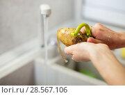 Купить «Female hands peel potatoes», фото № 28567106, снято 12 декабря 2018 г. (c) Светлана Кузнецова / Фотобанк Лори