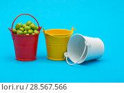 Купить «Натюрморт с вёдрами и зелёным горошком на голубом фоне», фото № 28567566, снято 4 июня 2018 г. (c) V.Ivantsov / Фотобанк Лори