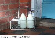 Купить «Blue tit (Parus caeruleus) drinking cream from milk bottle. Surrey, England, UK, August. Digital composite», фото № 28574938, снято 16 августа 2018 г. (c) Nature Picture Library / Фотобанк Лори