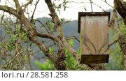 Купить «Small wooden birdhouse hanging on tree», видеоролик № 28581258, снято 29 января 2018 г. (c) BestPhotoStudio / Фотобанк Лори