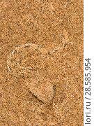 Купить «Peringuey's adder (Bitis peringueyi) hiding in the sand. Swakopmund, Dorob National Park,  Namibia», фото № 28585954, снято 23 июля 2018 г. (c) Nature Picture Library / Фотобанк Лори