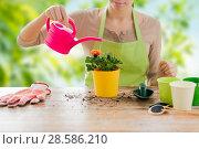 Купить «close up of woman planting and watering roses», фото № 28586210, снято 3 марта 2015 г. (c) Syda Productions / Фотобанк Лори
