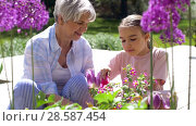 Купить «grandmother and girl planting flowers at garden», видеоролик № 28587454, снято 11 июня 2018 г. (c) Syda Productions / Фотобанк Лори