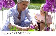 Купить «grandmother and girl study flowers at garden», видеоролик № 28587458, снято 11 июня 2018 г. (c) Syda Productions / Фотобанк Лори