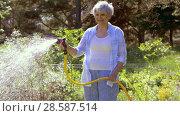 senior woman watering lawn by hose at garden. Стоковое видео, видеограф Syda Productions / Фотобанк Лори