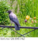 Купить «Серая ворона на ограде газона», эксклюзивное фото № 28599742, снято 18 июня 2018 г. (c) Александр Щепин / Фотобанк Лори