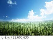 Купить «fir tree forest in sunny day», фото № 28600630, снято 15 августа 2015 г. (c) Iakov Kalinin / Фотобанк Лори