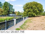 Купить «Клён ясенелистный, или американский (Acer negundo) на набережной реки Яузы в засуху 2010 года. Москва», фото № 28607798, снято 21 августа 2010 г. (c) Алёшина Оксана / Фотобанк Лори