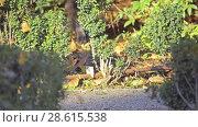 Купить «Grey cat walks along fallen leaves», видеоролик № 28615538, снято 28 февраля 2018 г. (c) BestPhotoStudio / Фотобанк Лори