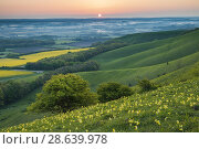 Купить «Spring sunrise in South Downs National Park, East Sussex, England.», фото № 28639978, снято 7 мая 2018 г. (c) age Fotostock / Фотобанк Лори
