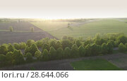 Aerial panoramic video in 4K from the drone, a bird's eye view of abstract geometric forms of abandoned runway, forests and agricultural fields in the summer evening at sunset. Стоковое видео, видеограф Ярослав Данильченко / Фотобанк Лори