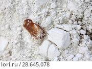 Купить «Белемнит в меловой породе», фото № 28645078, снято 25 июня 2018 г. (c) Галина Лукьяненко / Фотобанк Лори