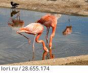 Купить «Розовые и красные фламинго с опущенными головами в Московском зоопарке», эксклюзивное фото № 28655174, снято 7 мая 2016 г. (c) lana1501 / Фотобанк Лори