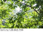 Купить «Проливной дождь в контровом солнечном свете», фото № 28663194, снято 23 июня 2018 г. (c) Алёшина Оксана / Фотобанк Лори