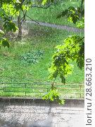 Купить «Ливень при свете солнца. Грибной (Слепой) дождь. Лужа в пузырях», фото № 28663210, снято 23 июня 2018 г. (c) Алёшина Оксана / Фотобанк Лори