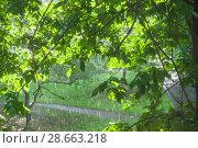 Купить «Дождь в солнечный день», фото № 28663218, снято 23 июня 2018 г. (c) Алёшина Оксана / Фотобанк Лори