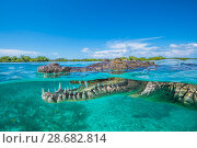 Купить «RF - Split level photo of an American crocodile (Crocodylus acutus) floating at the surface over a shallow seagrass meadow, close to mangroves. Jardines...», фото № 28682814, снято 20 августа 2018 г. (c) Nature Picture Library / Фотобанк Лори