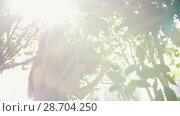 Купить «Sad female musician playing a violin among the tree branches at sunset», видеоролик № 28704250, снято 15 августа 2018 г. (c) Константин Шишкин / Фотобанк Лори