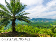 Купить «Живописный вид с горы на поля, джунгли и и долину Краби, Таиланд», фото № 28705482, снято 17 февраля 2013 г. (c) Игорь Рожков / Фотобанк Лори