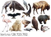 Купить «Set of fauna of North American animals.», фото № 28723702, снято 24 марта 2019 г. (c) Яков Филимонов / Фотобанк Лори
