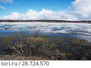 Купить «Slavonian grebe (Podiceps auritus) breeding habitat during early spring snow melt and  thaw. During this time there is limited availability of nest sites...», фото № 28724570, снято 17 июля 2018 г. (c) Nature Picture Library / Фотобанк Лори