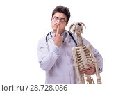 Купить «Doctor with dog skeleton isolated on white background», фото № 28728086, снято 27 февраля 2018 г. (c) Elnur / Фотобанк Лори