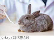 Купить «Vet doctor checking up rabbit in his clinic», фото № 28730126, снято 4 апреля 2018 г. (c) Elnur / Фотобанк Лори