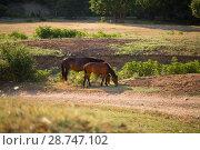 Купить «Табун лошадей в поле», фото № 28747102, снято 9 июня 2018 г. (c) Марина Володько / Фотобанк Лори