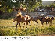 Купить «Табун лошадей в поле», фото № 28747138, снято 9 июня 2018 г. (c) Марина Володько / Фотобанк Лори