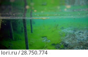 Купить «Underwater nature in the clear blue water», видеоролик № 28750774, снято 23 июля 2018 г. (c) Константин Шишкин / Фотобанк Лори