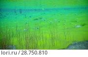 Купить «Amazing colorful underwater nature in the clear lake», видеоролик № 28750810, снято 23 июля 2018 г. (c) Константин Шишкин / Фотобанк Лори