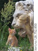 Купить «Рыжий котёнок смотрит в рот скульптуре рычащего льва», фото № 28752850, снято 13 июля 2018 г. (c) Сайганов Александр / Фотобанк Лори