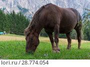 Купить «Horse on an Alpine meadow with blooming crocuses, Italia», фото № 28774054, снято 23 сентября 2016 г. (c) Игорь Овсянников / Фотобанк Лори