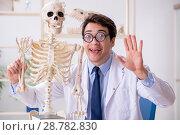 Купить «Crazy professor studying human skeleton», фото № 28782830, снято 7 марта 2018 г. (c) Elnur / Фотобанк Лори
