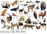 Купить «asia animals isolated», фото № 28791410, снято 13 декабря 2018 г. (c) Яков Филимонов / Фотобанк Лори