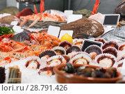 Купить «Image of showcase with diversity of fresh marine products», фото № 28791426, снято 26 января 2018 г. (c) Яков Филимонов / Фотобанк Лори