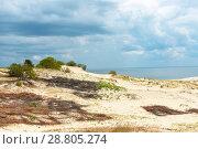 Купить «Песчаные дюны на Куршской косе у высоты Эфа. Калининградская область», эксклюзивное фото № 28805274, снято 11 июля 2018 г. (c) Александр Щепин / Фотобанк Лори