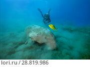 Купить «Female scubadiver looks on Dugong or Sea Cow (Dugong dugon) eating sea grass», фото № 28819986, снято 24 июля 2018 г. (c) Некрасов Андрей / Фотобанк Лори