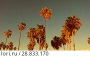 Купить «palm trees over sun shining in sky», видеоролик № 28833170, снято 8 июля 2018 г. (c) Syda Productions / Фотобанк Лори